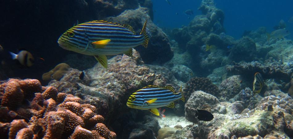 Staytravelling Maledivenurlaub Schnorcheln