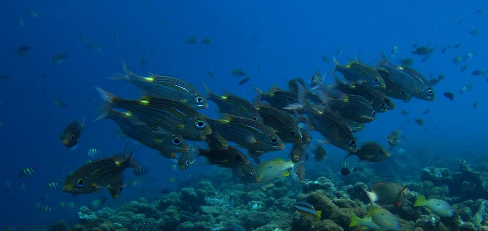 Staytravelling Schnorchel Maledivenreise