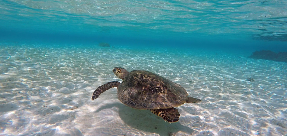 Staytravelling Malediven Schildkroeten