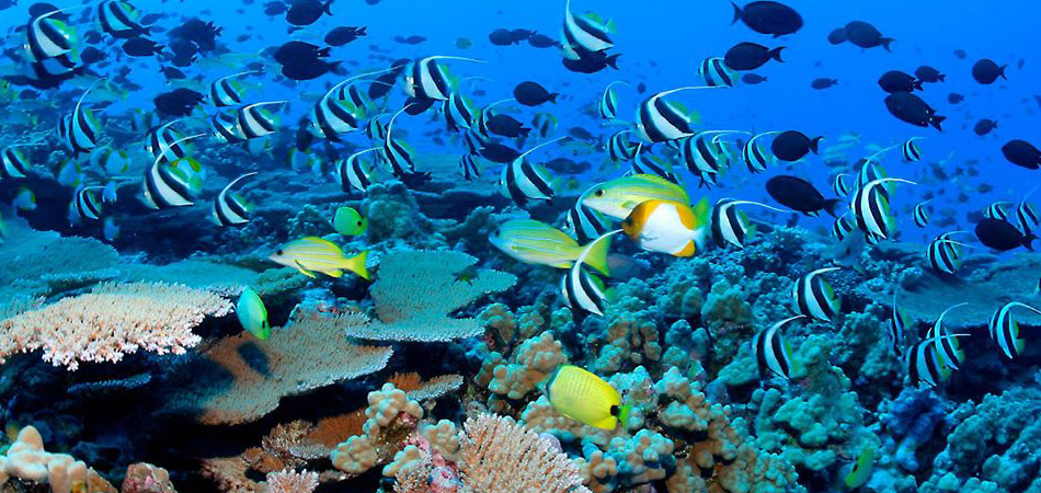 Staytravelling Malediven Tauchurlaub