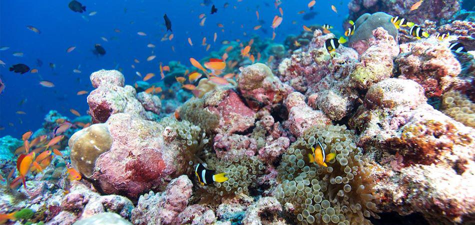 Staytravelling Maledivenreise Hanimaadhoo