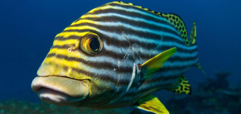 Staytravelling Tauchsafari Deep South Malediven