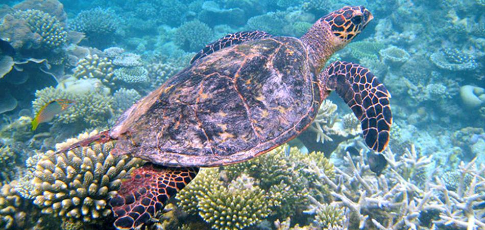 Staytravelling Malediven Schnorcheln